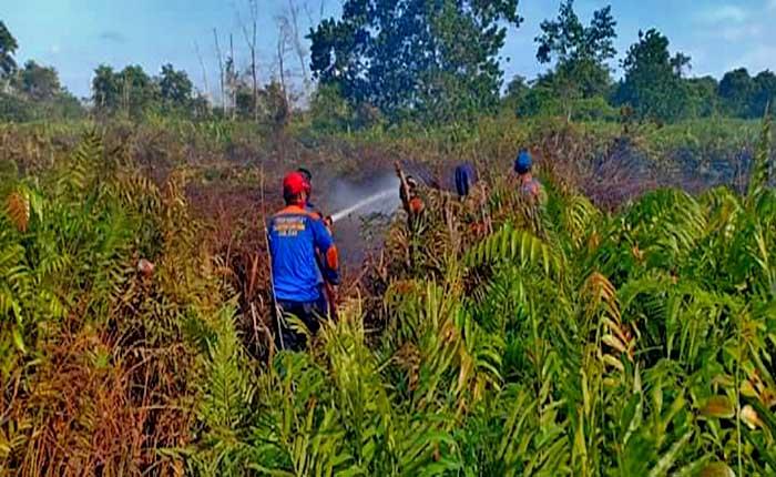 kebakaran lahan siak - Publiknews