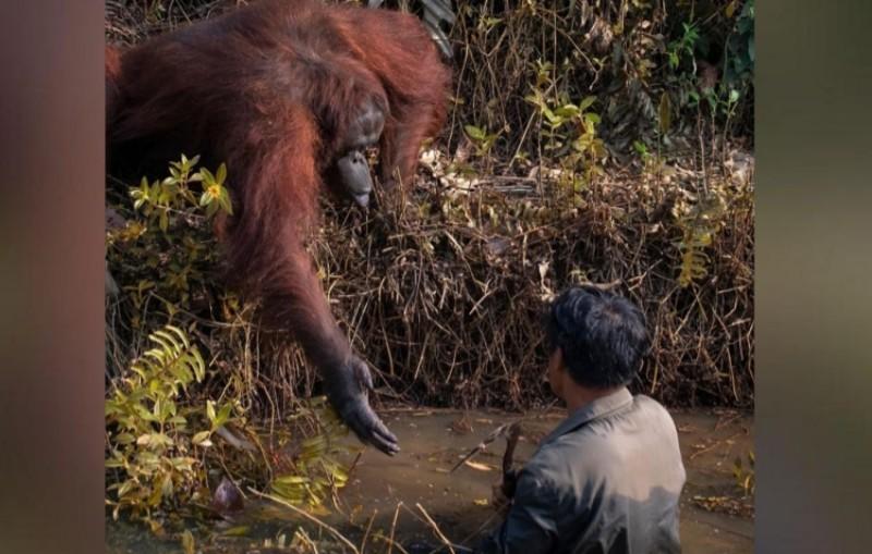 orangutan64 - Publiknews