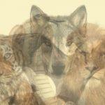 Tes Kepribadian : Binatang Pertama yang Kamu Lihat Bisa Ungkap Sifat dan Watak Aslimu Selama Ini, Kelelawar kah?