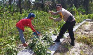 Peternakan Itik dan Ikan di Halaman Belakang Polsek Koto Gasib