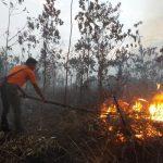 Puluhan Hektar Lahan di Siak Terbakar, Petugas Berjibaku Padamkan Api Hingga Malam
