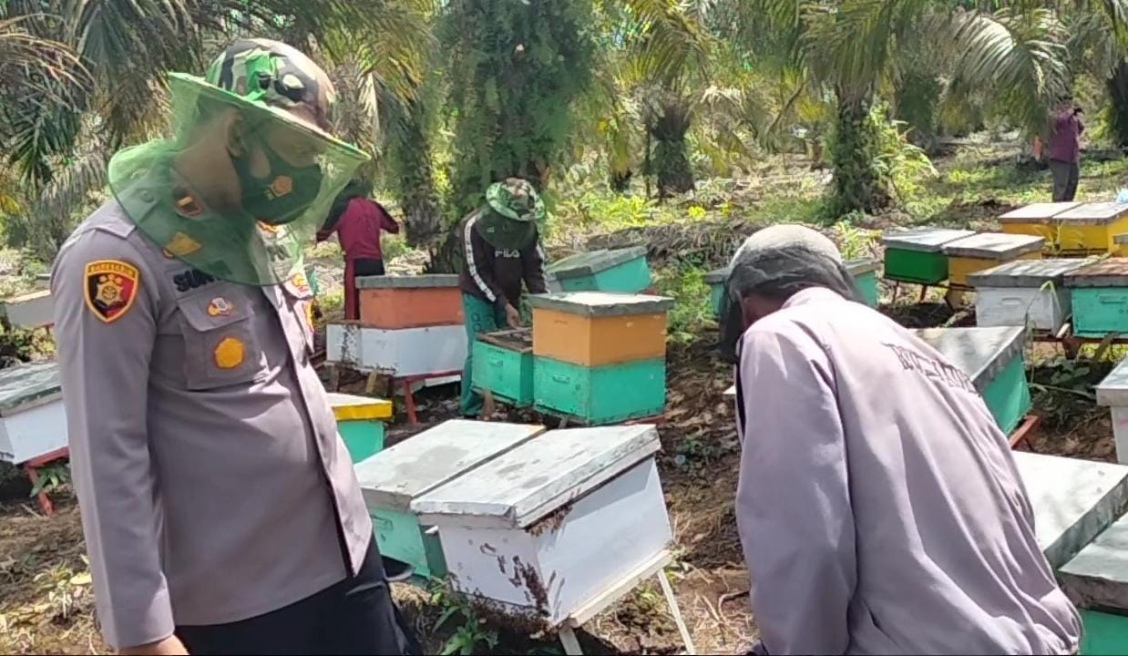 Pandemi Covid-19, Polsek Koto Gasib Pasarkan Madu Budidaya Warga Teluk Rimba
