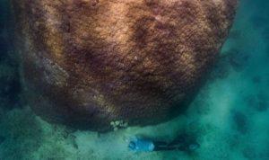 Ilmuwan Australia Temukan Terumbu Karang Terbesar dan Tertua, Berumur 400 Tahun
